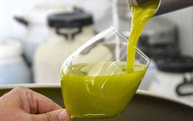olio extravergine di oliva al separatore